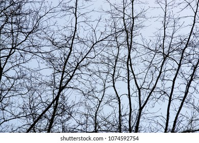 Branches in the spring, structure as the background