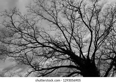 Branches of tree in black and white