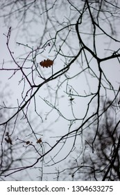 branches of the tree in the forest with leaf on it with misty sky in the background