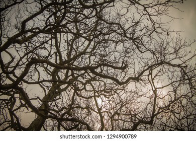 Branches of a tree on the sky background.