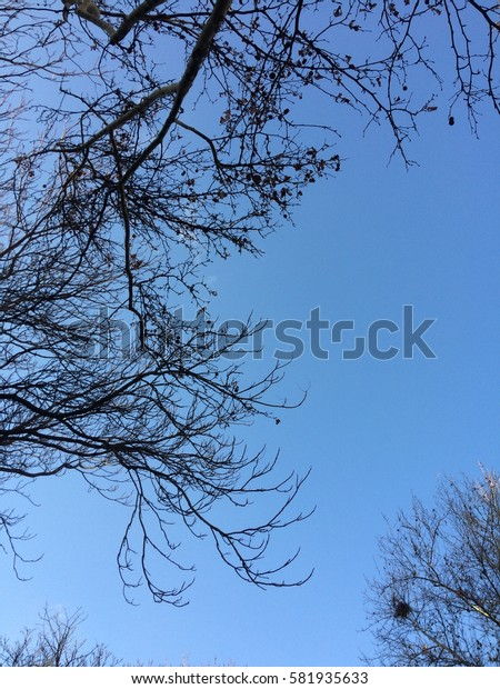 Branches of trees