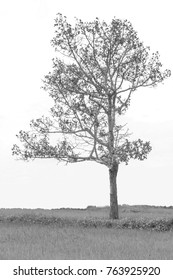 The branches of trees and leaves are a natural beauty,style black and white.