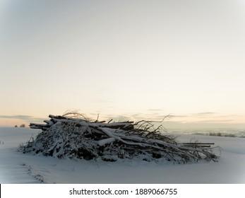 Zweige von Bäumen im Winterland