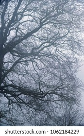 Branches and twigs of bare winter tree in mist.
