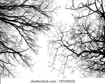 Branches and twigs of trees without leaves in winter. Photographed against the overcast sky from below. Contrast images.