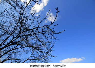 The branches are twisted and beautiful. The main scene is the sky is beautiful.