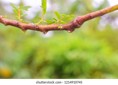 Branches with water droplets, green background, scene with branches