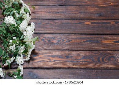 The branches of white flowers on a dark wooden background. Space for Text. selective focus. Valentine's Day and Mother's Day background.