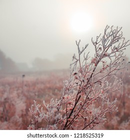 Branches in winter with hoar frost and ice crystals at sunrise