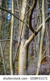 Branches without leaves in early spring. Abstract forest background