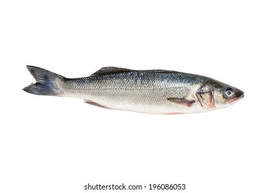 Branzini whole fresh fish, also known as European sea bass, farm raised, product of Greece, isolated on white background.