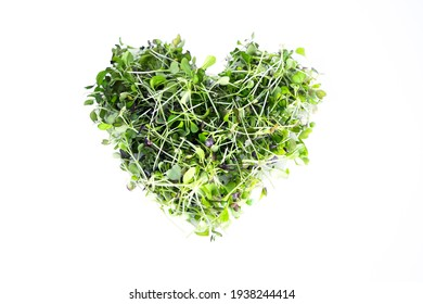 Brassica broccoli and red cabbage microgreens in heart shape isolated