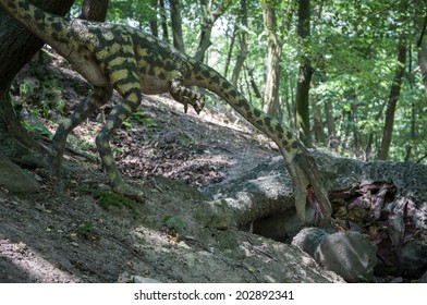 BRATISLAVA, SLOVAKIA - JUN 28: Realistic model of dinosaur Coelophysis at Dinopark on Jun 28, 2014 in Bratislava