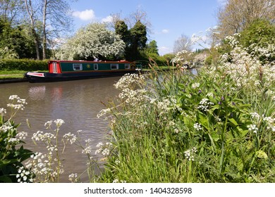 Braunston, Northamptonshire / UK - May 21st 2019: White cow parsley and other spring wild flowers bloom on the side of the Grand Union canal. On the far bank, blurred by distance is a narrowboat.