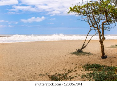 Brava beach in Itajai, with tree, rough sea and blue sky with clouds, Santa Catarina