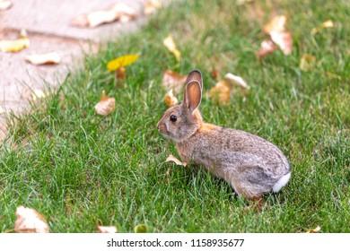 Brave furry bunny