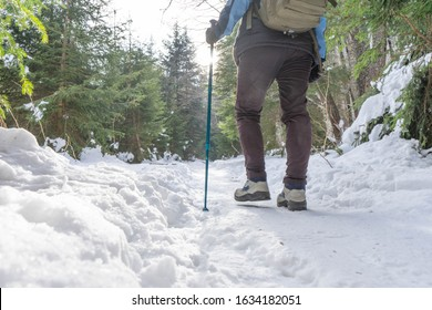 Brave mountaineer woman walking alone with rucksack in the snow, holding a blue stick on the woodland. Walker girl ascend with determination in wintertime. Ascend mountain path and exploration lonely