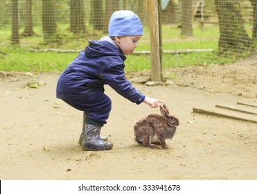 brave rabbit and little boy. not shy rabbit allowed to pat yourself child