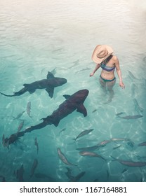 Brave young woman in the water with nurse sharks at Compass Cay in The Bahamas.