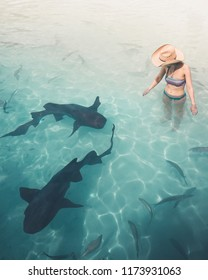 Brave young woman in the water with nurse sharks at the Bahamas.