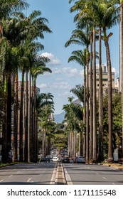 Brazil avenue with its palm trees on a sunny afternoon. Belo Horizonte, Minas Gerais, Brazil.