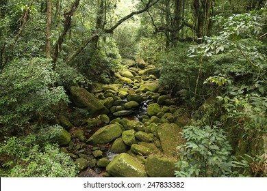 Brazil - jungle view in Mata Atlantica (Atlantic Rainforest ecosystem) in Serra dos Orgaos National Park (Rio de Janeiro state).