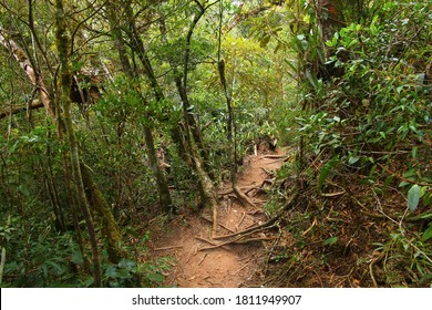 Brazil nature. Jungle flora in Serra dos Orgaos National Park. Mata Atlantica (Atlantic Rainforest).
