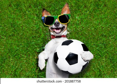 brazil soccer dog holding a ball and laughing out loud on football field