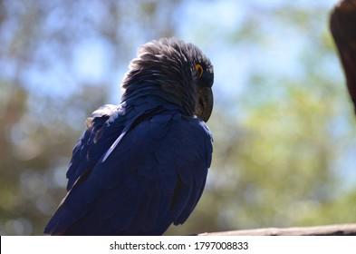 Brazilian fauna animals such as birds, alligators, crocodiles, jaguars, falcon, eagle, hawk, macaws