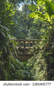 Brazilian Green Florest
