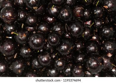 Brazilian Jaboticaba fruit
