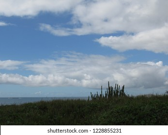 Brazilian sandbank vegetation on a cloudy blue sky background