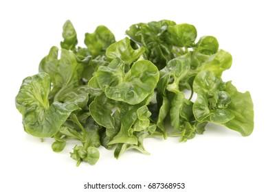 Brazilian Spinach, a native South American plant. Non sharpen file