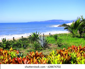 Brazilian Tropical View. Summer view of coastline with multi colored bromeliad and blue water sea, Itapema, Santa Catarina State, Southern Brazil