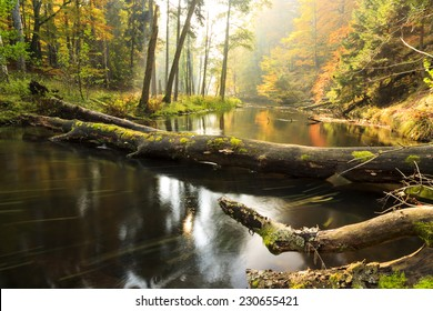 Brda river in north Poland.Autumn time/Autumn river and forest