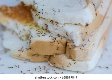 Bread rot and ants