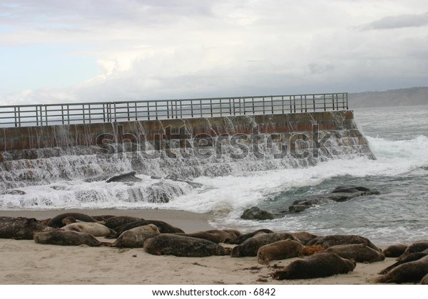 breaker wall near a beach with resting sea lions