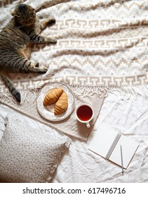 Breakfast in bed concept - french croissants with a cup of tea. A cozy warm blanket, british cat, cotton flowers and a notepad in frame. Top view. Soft light colors. Flat lay style.