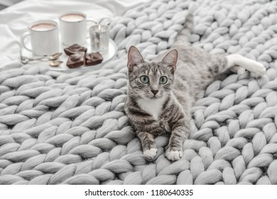 Breakfast in bed. Grey cute cat lying on bed with breakfast coffee cups on background.