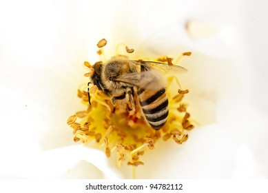 Breakfast Bee