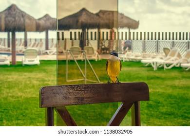 Breakfast Bird - Natal - Rio Grande do Norte . Brazil