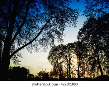 Breaking dawn - trees silhouette