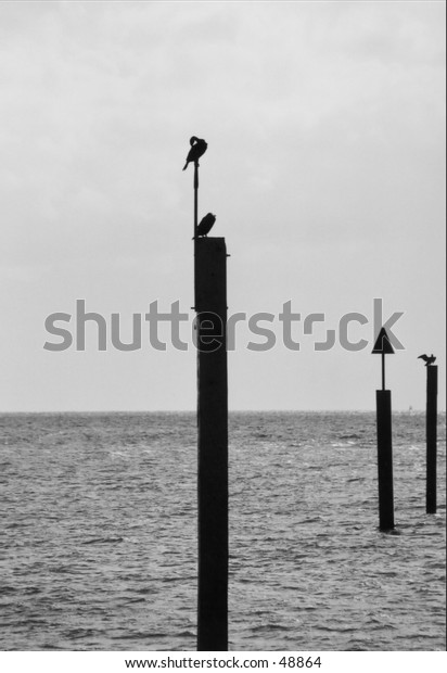 breakwater with birds black and white