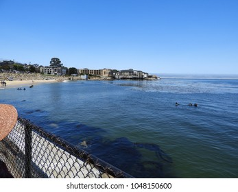 Breakwater cove Monterey divers in the water