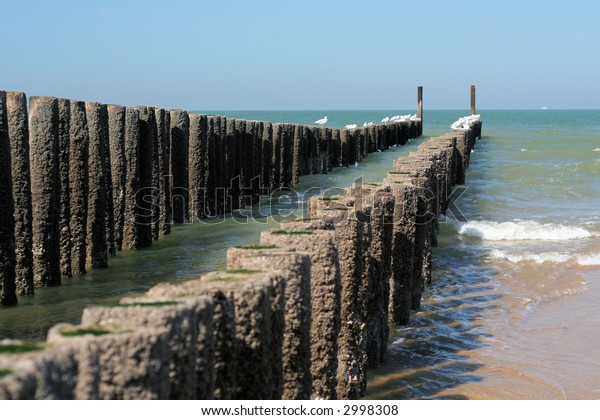Breakwater of wooden poles on the beach with some gulls on it