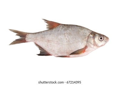 Bream fish isolated on white background