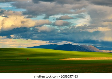 Breathtaking aerial view of wheat field with shadows on it made of clouds after rain; Scenic view ; Agricultural concept.