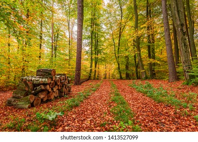 Breathtaking and colorful forest in the autumn, Europe