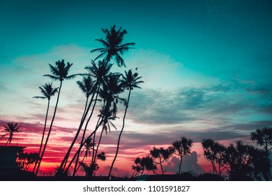 Breathtaking evening scene the tropical plants palms on the sunset background. Unawatuna, Sri Lanka. Spectacular combination of the turquoise and scarlet colors. Perfect image for the wallpaper.
