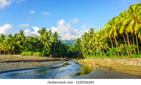 Breathtaking scenery of hight mountains tops covered by clouds in the background and small river that flows between the lush vegetation of palm trees in the front making this scenery very spectacular.